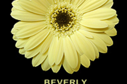 Mini Gerberas-yellow